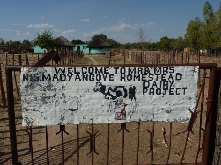 Ny samlingsregering bildades i zimbabwe